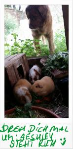 Schweinigehege