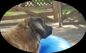 Xera und der kleine Ball