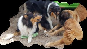 unser Leo-Collie-Clan von der Leoranch