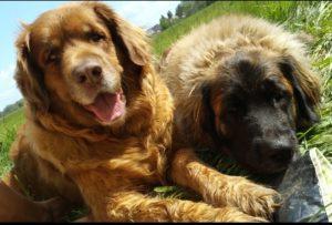 Xera und Leotie