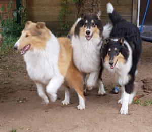 Lautenschlag-Trio